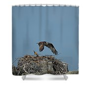 River Hawk Hovering Over A Nest Shower Curtain