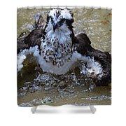 River Hawk Splashing Around In The Water Shower Curtain