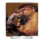 River Otter With His Catch Of The Day Shower Curtain