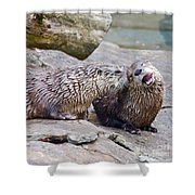 River Otters Shower Curtain