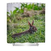 River Rabbit Shower Curtain