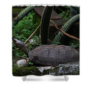 River Turtle 1 Shower Curtain