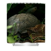 River Turtle 2 Shower Curtain