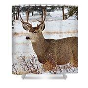 Rmnp Mule Deer 2 Shower Curtain