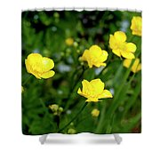 Road Of Flowers Shower Curtain