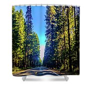 Road Through The Forest Shower Curtain