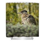 Roadrunner On Guard  Shower Curtain