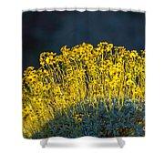 Roadside Flowers Shower Curtain