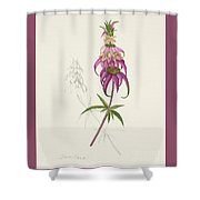 Roadside Jester Shower Curtain
