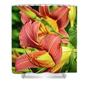 Roadside Lily Shower Curtain
