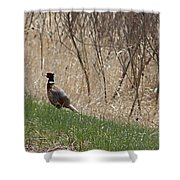 Roadside Rooster Pheasant Shower Curtain