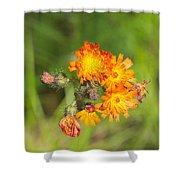 Roadside Wildflower Shower Curtain