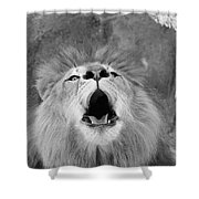 Roar  Black And White Shower Curtain