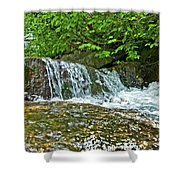 Roaring Through The Woods Shower Curtain