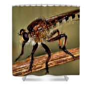 Robber Fly Shower Curtain