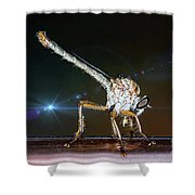 Robber Fly With It's Prey- Efferia Albibarbis Shower Curtain
