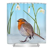 Robin And Cold Snowdrops Shower Curtain