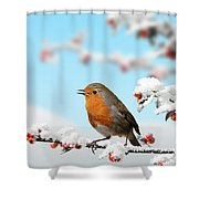 Robin And Cotoneaster With Snow Shower Curtain