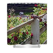 Robin And Roses Shower Curtain