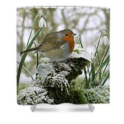 Robin And Snowdrops Shower Curtain