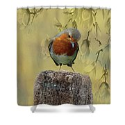 Robin Bird Shower Curtain