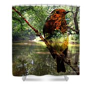 Robin By The River Shower Curtain