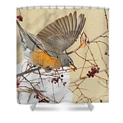 Robin Eating Berries Shower Curtain