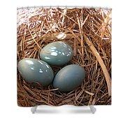 Robin Eggs Shower Curtain