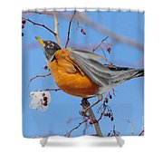 Robin Eying Berries Shower Curtain