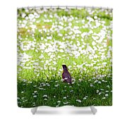 Robin In A Field Of Daisies Shower Curtain
