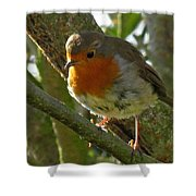 Robin In A Tree Shower Curtain