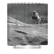 Robin In Black And White Shower Curtain