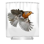 Robin In Flight Shower Curtain