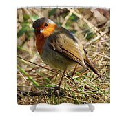 Robin In Hedgerow 3 Shower Curtain