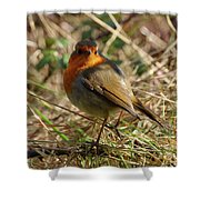 Robin In Hedgerow 2 Inch Donegal Shower Curtain