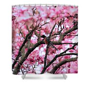 Robin In Magnolia Tree Shower Curtain