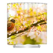Robin In Spring Blossom Cherry Tree Shower Curtain