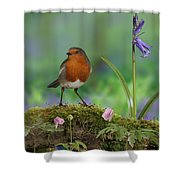 Robin In Spring Wood Shower Curtain