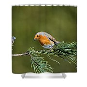 Robin In The Garden Shower Curtain