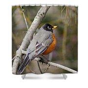Robin In Tree 2 Shower Curtain