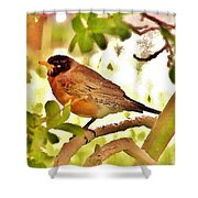 Robin In Tree Shower Curtain