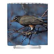 Robin Bird Shower Curtain