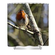 Robin On Branch Donegal Shower Curtain