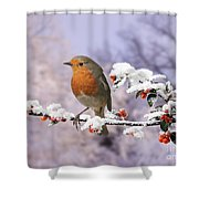 Robin On Cotoneaster With Snow Shower Curtain