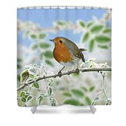 Robin On Frosty Briar Shower Curtain