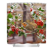 Robin On Holly Twigs Shower Curtain