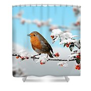 Robin On Snowy Cotoneaster Shower Curtain