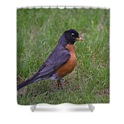 Robin On The Lawn Shower Curtain