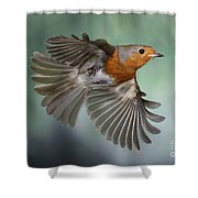 Robin On The Wing Shower Curtain