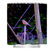 Robin On The Wires Shower Curtain